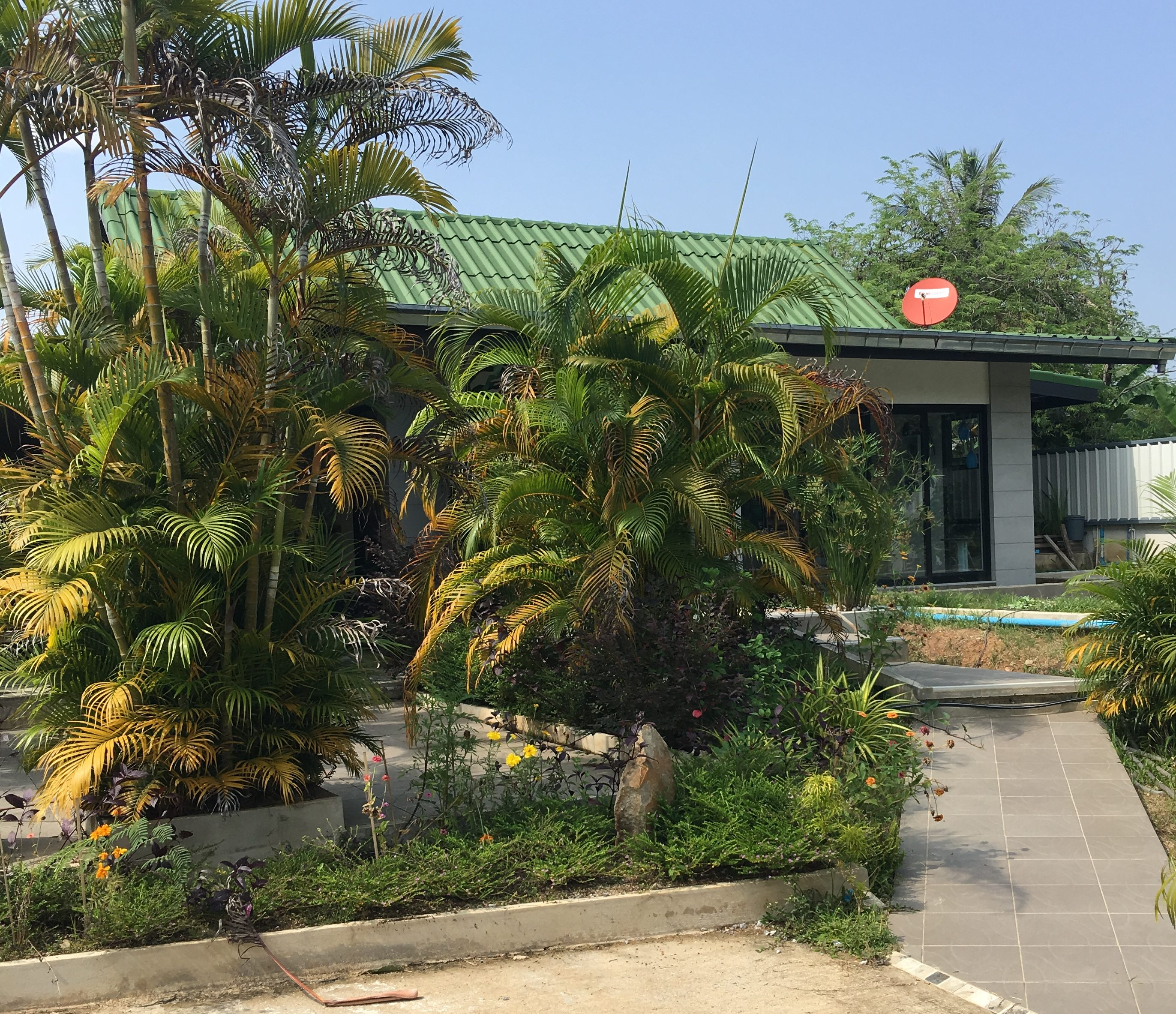 Tropical fish cafe