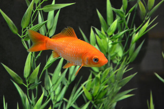 The Common Goldfish - Tunys fitness centre and cafe bar