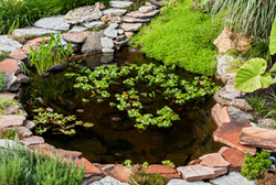 So you've decided to install an outdoor pond, and you have a pretty good idea of which fish species you want to stock. You may even have a distinct notion of the impact you want the pond to have on the surrounding landscape.